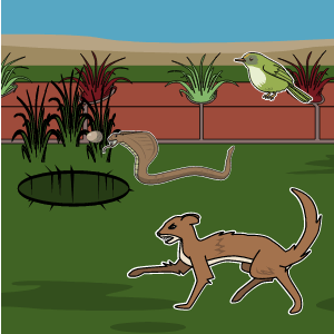 Rikki Tikki Tavi Lesson Plans