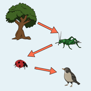 Food Chain Lesson Plans