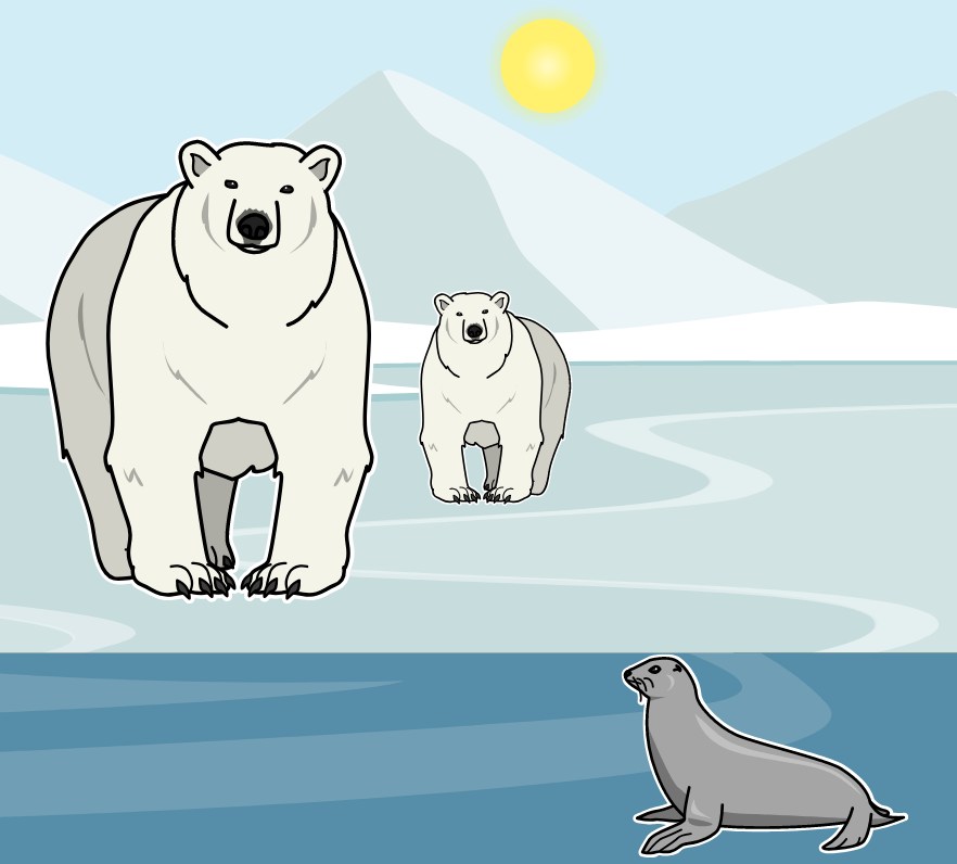 Var Lever Polarbjörnar? av Sarah Thomson - Polar Bear Growth Timeline