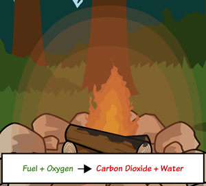 Carbon Cycle - Processes in the Carbon Cycle
