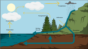 Water Cycle Diagram | Label Parts of the Water CycleStoryboard That