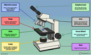 Basic Cells - Label a Microscope