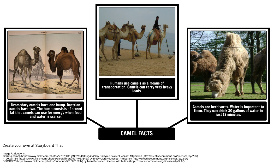 How the Camel Got His Hump - Camel Facts