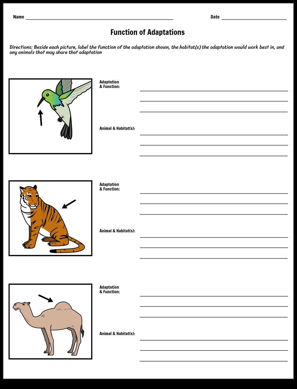 Adaptation Function Worksheet