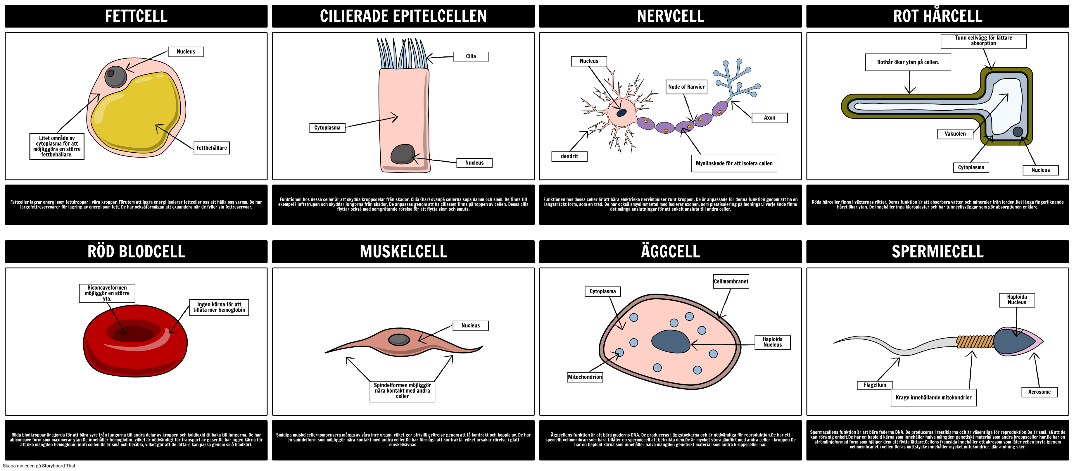 Specialized Cells